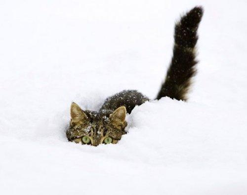 Это прекрасно что кошки что природа